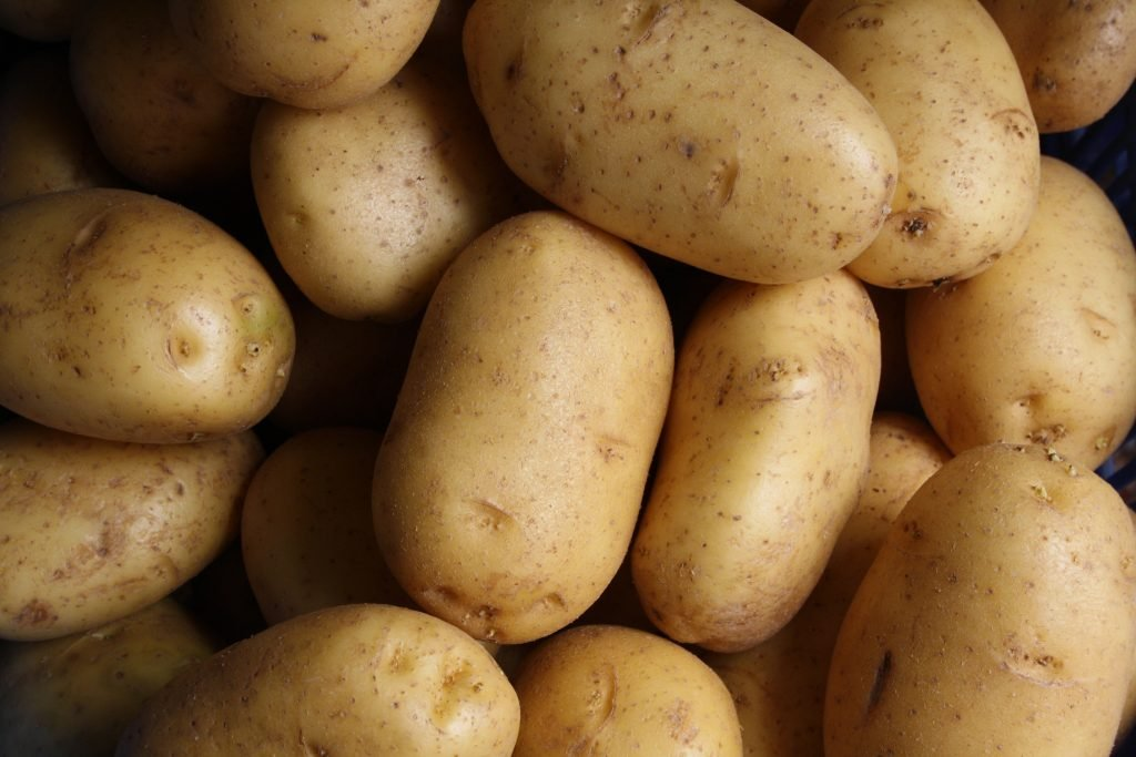 pile of russet potatoes